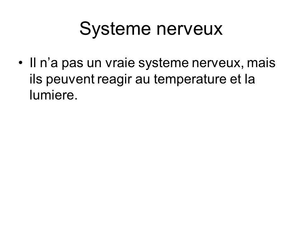 Systeme nerveux Il na pas un vraie systeme nerveux, mais ils peuvent reagir au temperature et la lumiere.