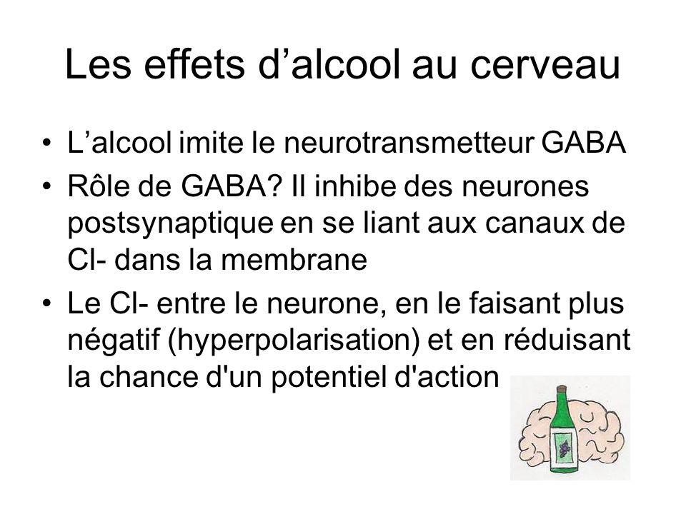 Les effets dalcool au cerveau Lalcool imite le neurotransmetteur GABA Rôle de GABA? Il inhibe des neurones postsynaptique en se liant aux canaux de Cl