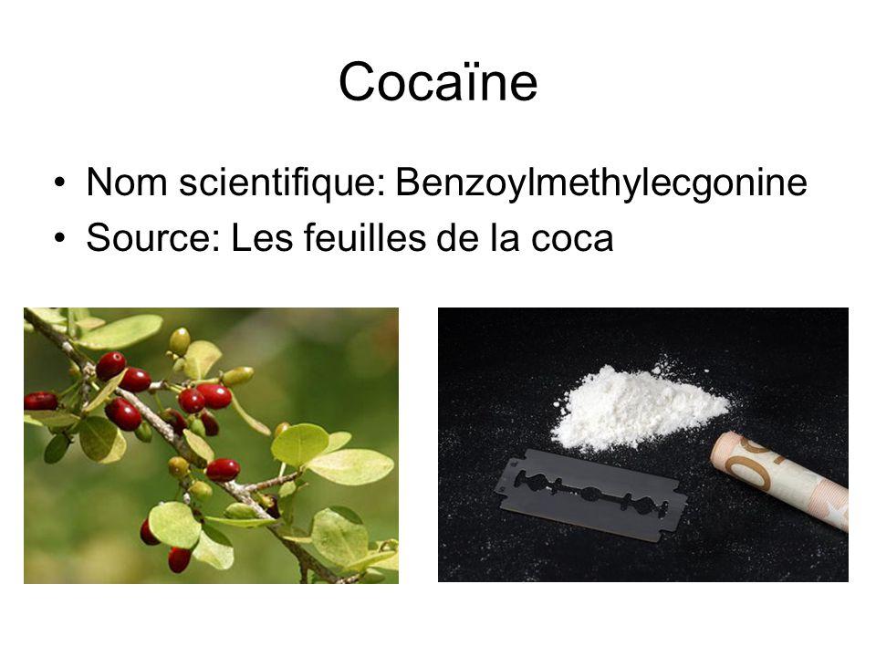 Cocaïne Nom scientifique: Benzoylmethylecgonine Source: Les feuilles de la coca
