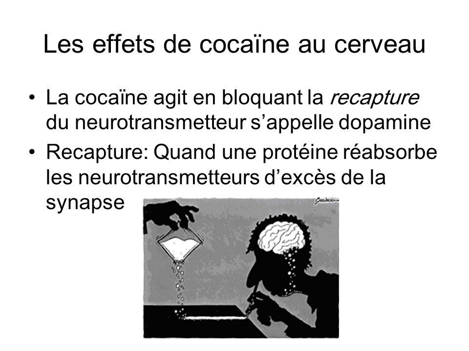 Les effets de cocaïne au cerveau La cocaïne agit en bloquant la recapture du neurotransmetteur sappelle dopamine Recapture: Quand une protéine réabsor