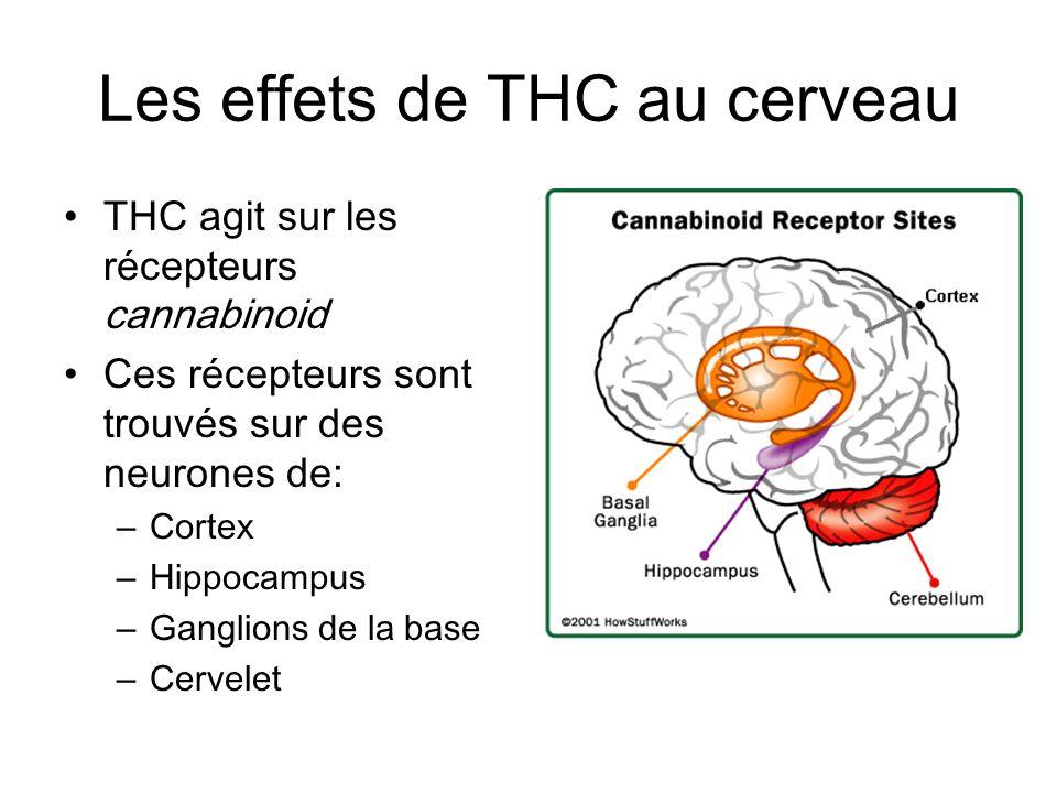 Les effets de THC au cerveau THC agit sur les récepteurs cannabinoid Ces récepteurs sont trouvés sur des neurones de: – Cortex – Hippocampus – Ganglio
