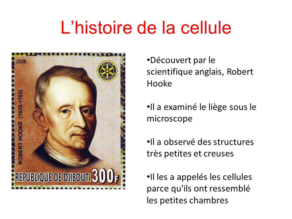 Lhistoire de la cellule Découvert par le scientifique anglais, Robert Hooke Il a examiné le liège sous le microscope Il a observé des structures très
