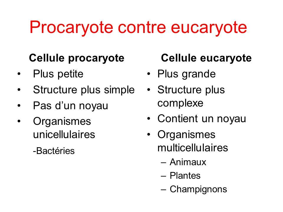 Procaryote contre eucaryote Cellule procaryote Plus petite Structure plus simple Pas dun noyau Organismes unicellulaires -Bactéries Cellule eucaryote