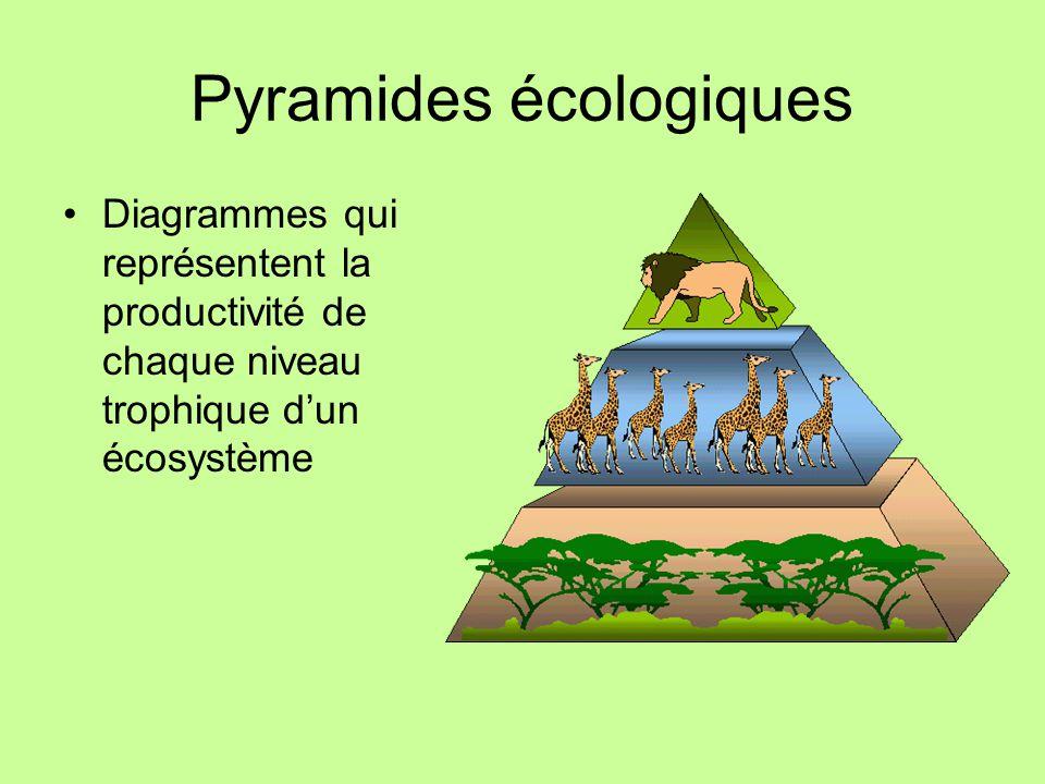 Pyramides écologiques Diagrammes qui représentent la productivité de chaque niveau trophique dun écosystème