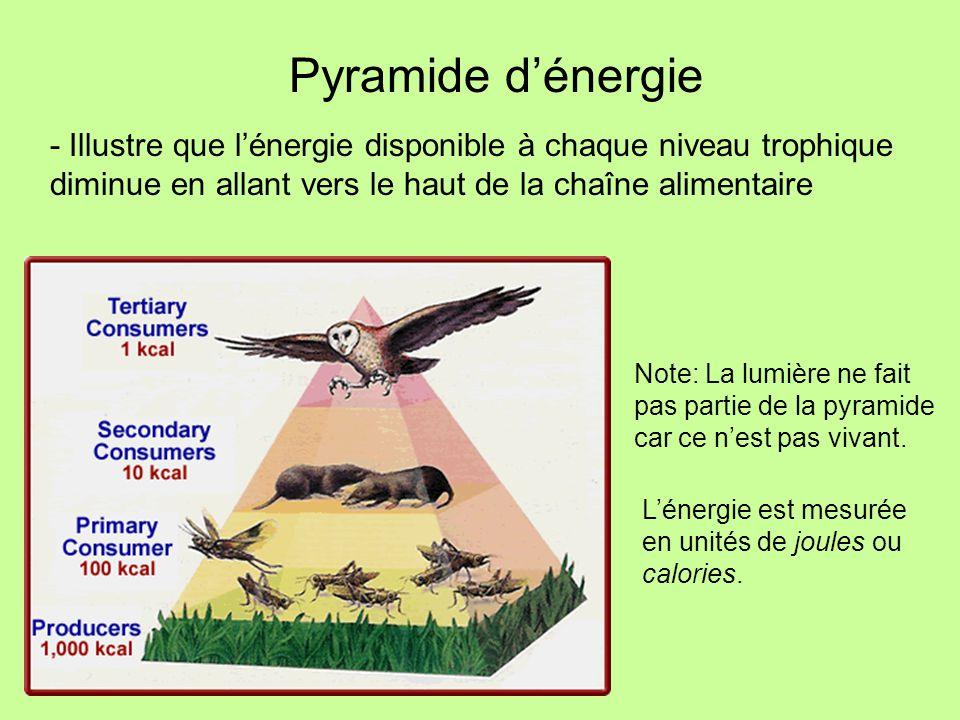 Pyramide dénergie - Illustre que lénergie disponible à chaque niveau trophique diminue en allant vers le haut de la chaîne alimentaire Note: La lumièr