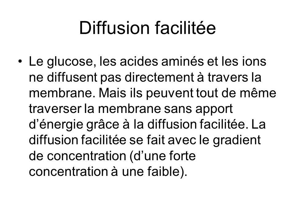 Diffusion facilitée Le glucose, les acides aminés et les ions ne diffusent pas directement à travers la membrane.