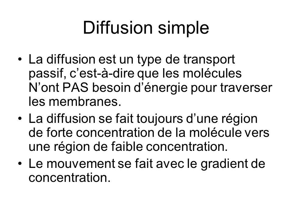 Diffusion simple La diffusion est un type de transport passif, cest-à-dire que les molécules Nont PAS besoin dénergie pour traverser les membranes.