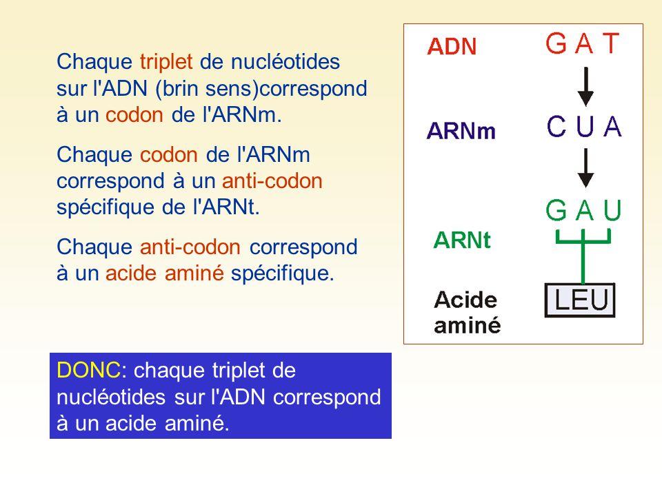 Chaque triplet de nucléotides sur l'ADN (brin sens)correspond à un codon de l'ARNm. Chaque codon de l'ARNm correspond à un anti-codon spécifique de l'