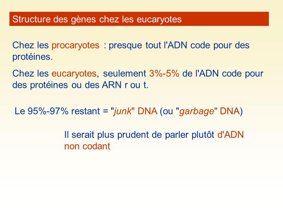 Structure des gènes chez les eucaryotes Chez les procaryotes : presque tout l'ADN code pour des protéines. Chez les eucaryotes, seulement 3%-5% de l'A