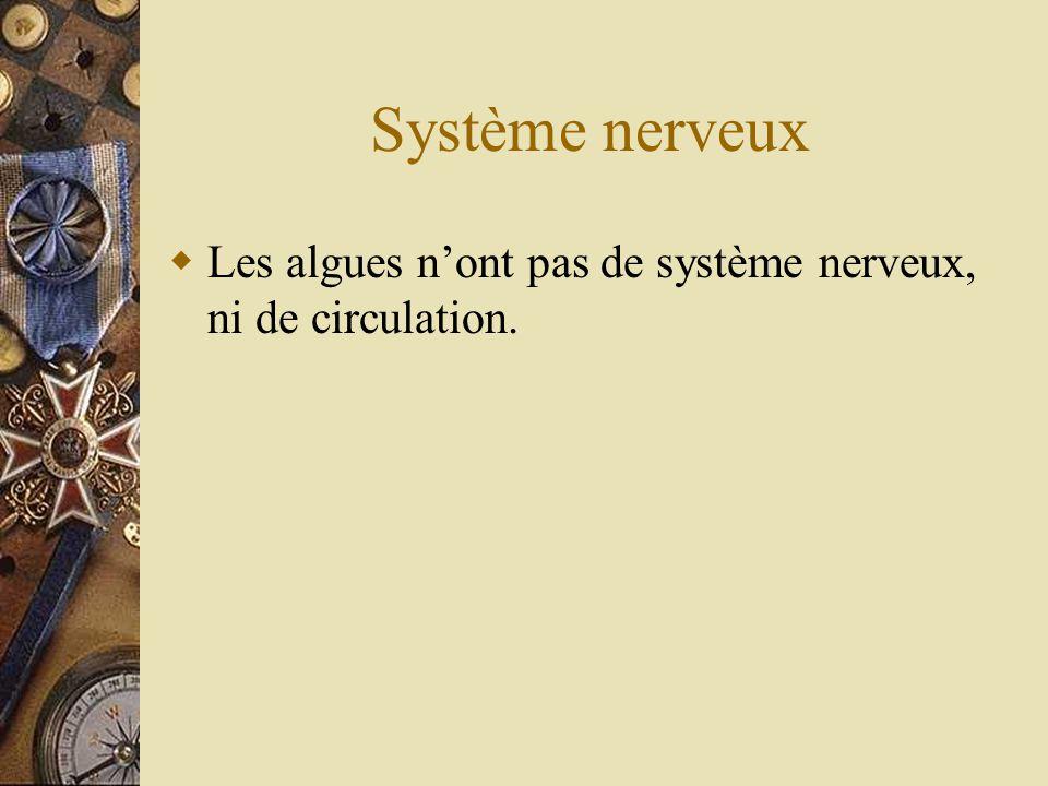 Système nerveux Les algues nont pas de système nerveux, ni de circulation.
