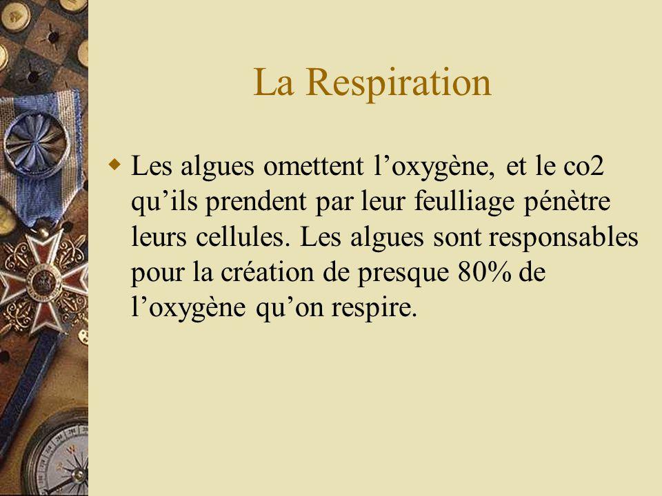 La Respiration Les algues omettent loxygène, et le co2 quils prendent par leur feulliage pénètre leurs cellules. Les algues sont responsables pour la