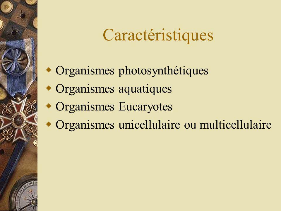 Caractéristiques Organismes photosynthétiques Organismes aquatiques Organismes Eucaryotes Organismes unicellulaire ou multicellulaire