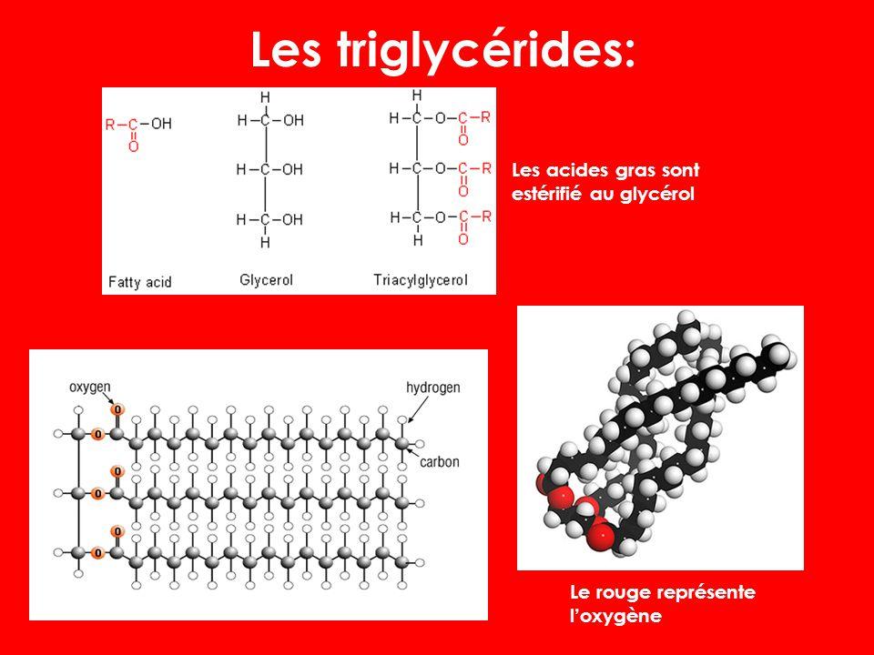 Les Triglycérides: Les triglycérides sont composés d'une glycéride à trois acides gras estérifiés. Les triglycérides se composent des chaînes d acides