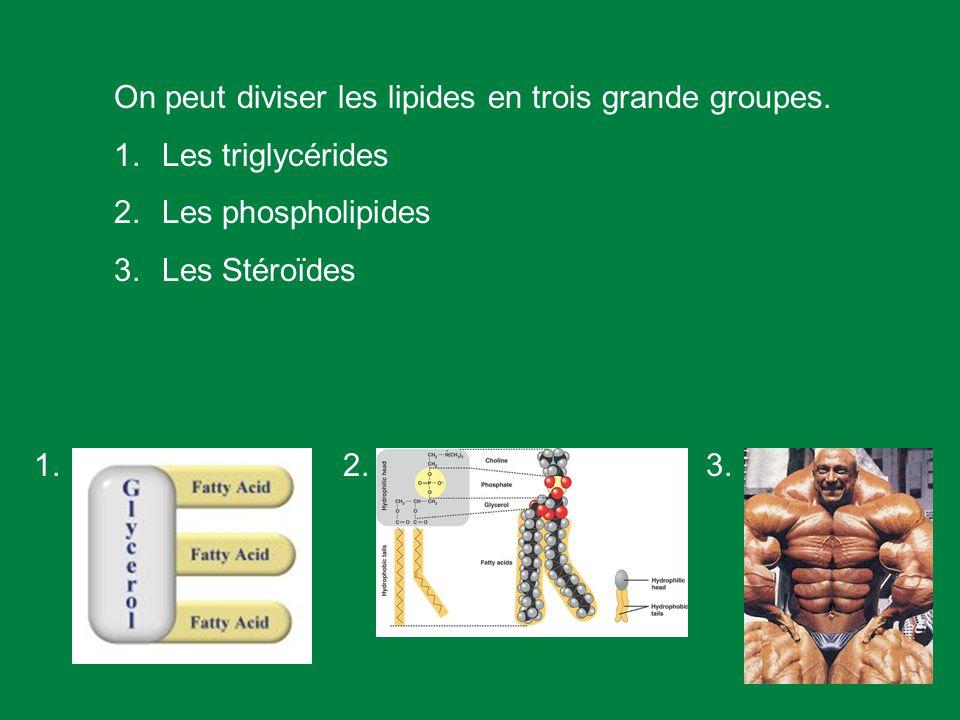 Lipos (grecque) = gras. Les lipides sont un diverse groupe des molécules hydrophobique. Ils sagissent de grandes molécules biologique qui ne composent