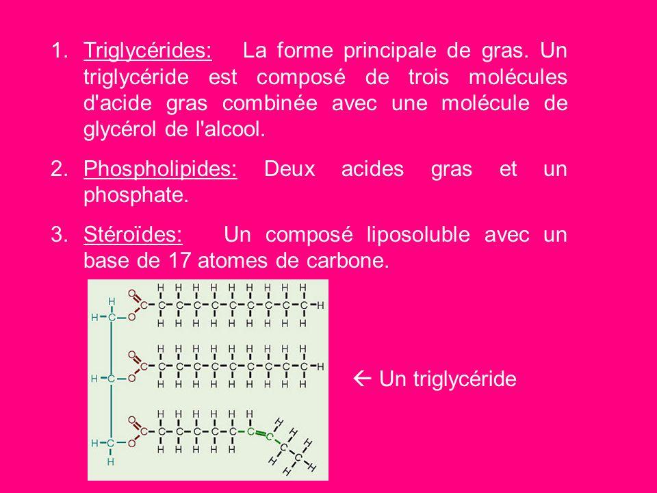 On peut diviser les lipides en trois grande groupes. 1.Les triglycérides 2.Les phospholipides 3.Les Stéroïdes 1. 2. 3.