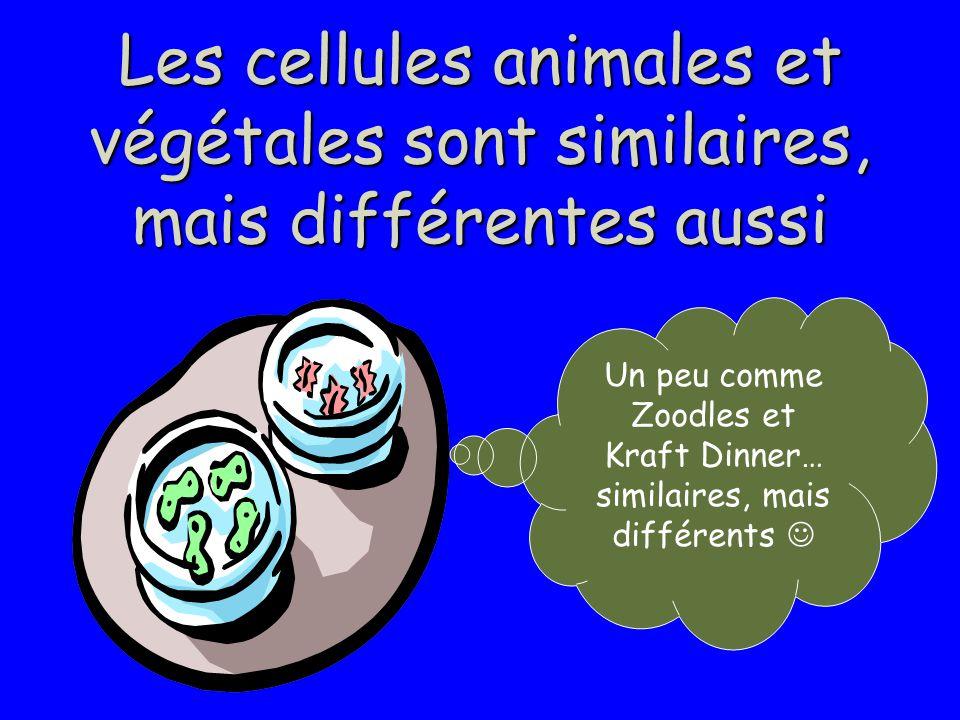 Les cellules animales et végétales sont similaires, mais différentes aussi Un peu comme Zoodles et Kraft Dinner… similaires, mais différents