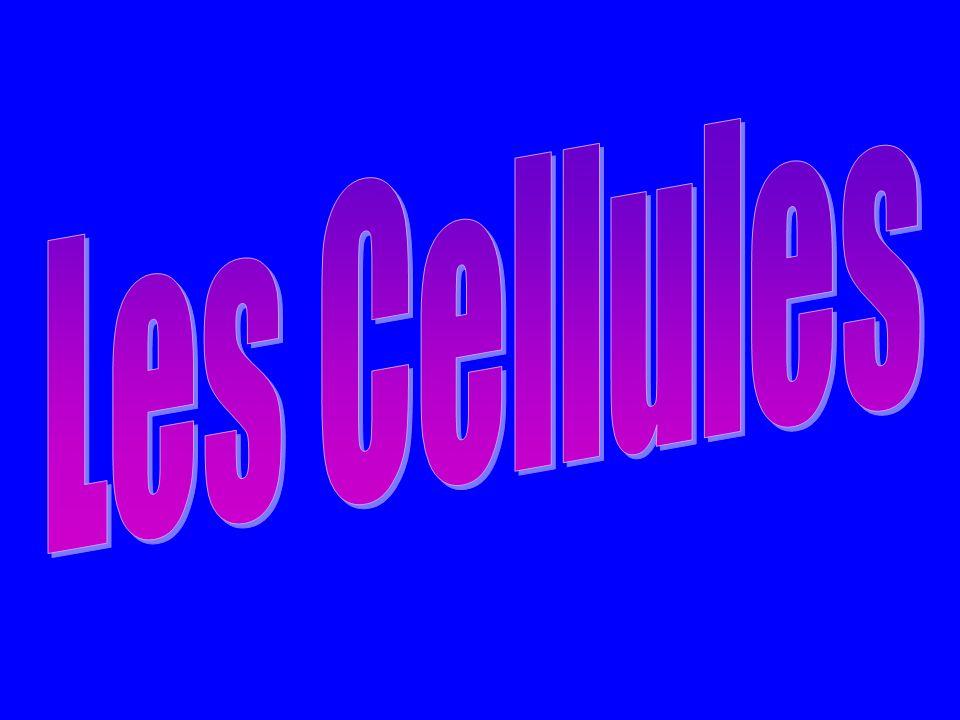 Cellule Animale Cellule Végétale