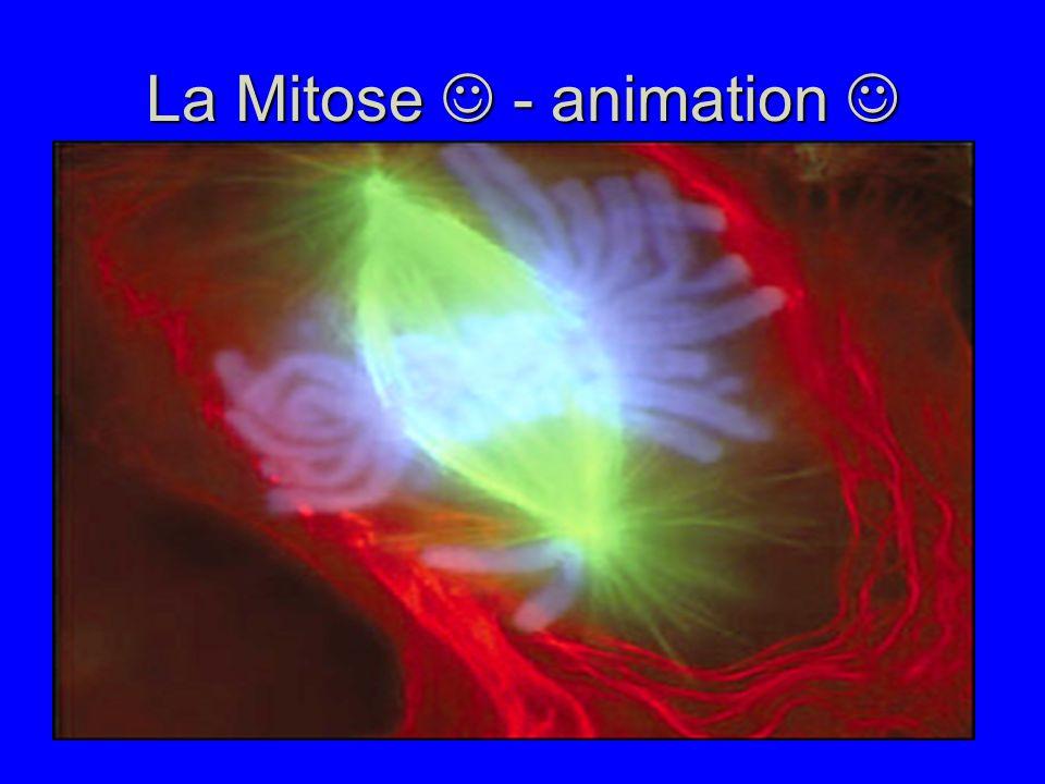 La Mitose - animation La Mitose - animation