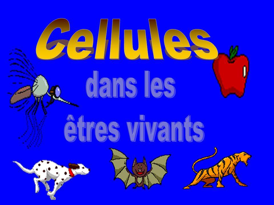 Les tâches de la cellule Les cellules sont comme des usines où les activités de la vie narrêtent jamais.