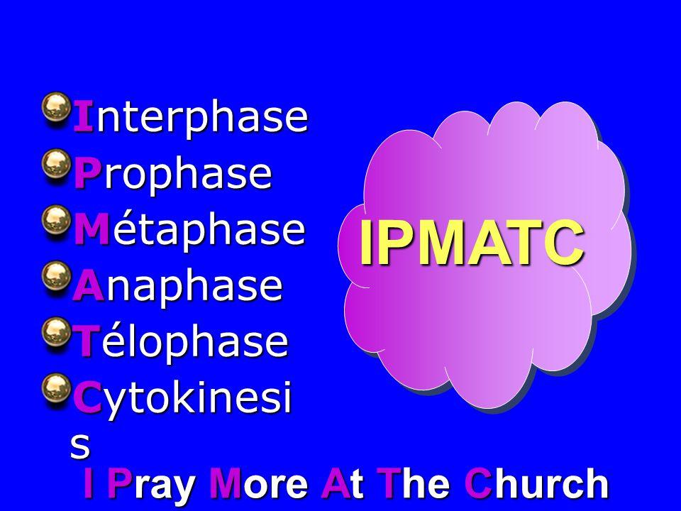Interphase Prophase Métaphase Anaphase Télophase Cytokinesi s IPMATC I Pray M ore At T he Church