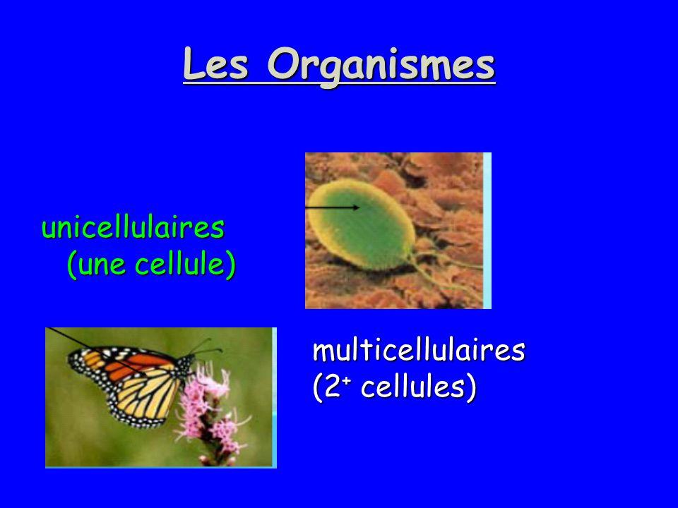 Les Organismes unicellulaires (une cellule) multicellulaires (2 + cellules)