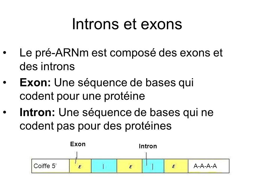 Introns et exons Le pré-ARNm est composé des exons et des introns Exon: Une séquence de bases qui codent pour une protéine Intron: Une séquence de bases qui ne codent pas pour des protéines Coiffe 5A-A-A-A Exon Intron