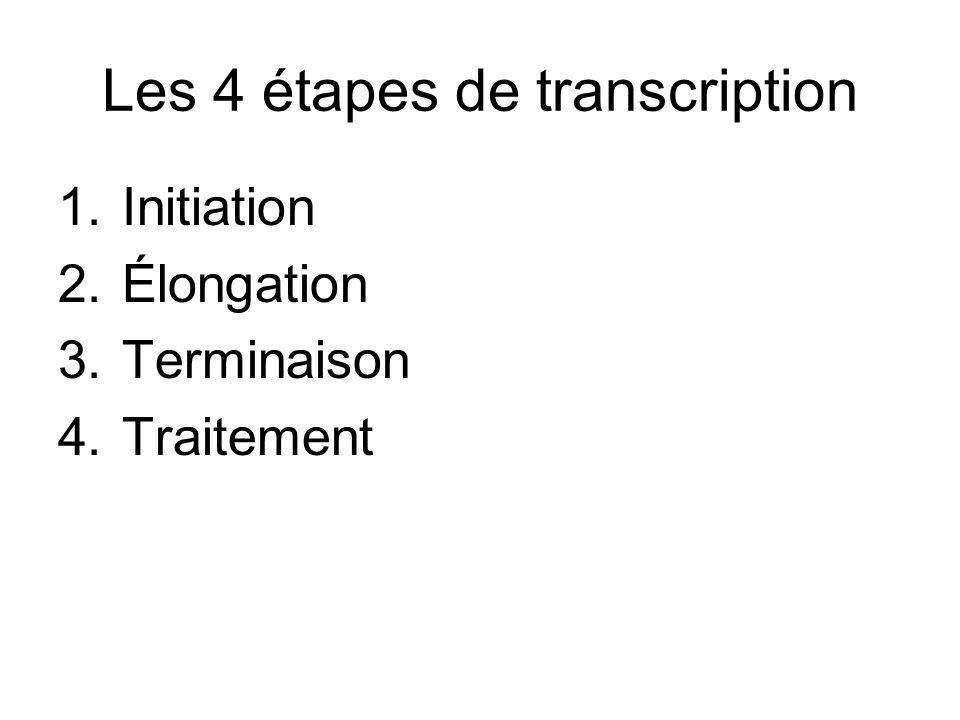 Les 4 étapes de transcription 1.Initiation 2.Élongation 3.Terminaison 4.Traitement