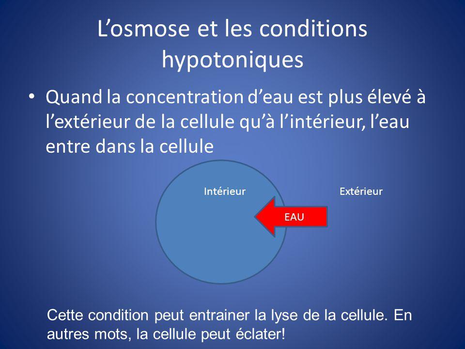 Losmose et les conditions hypotoniques Quand la concentration deau est plus élevé à lextérieur de la cellule quà lintérieur, leau entre dans la cellul