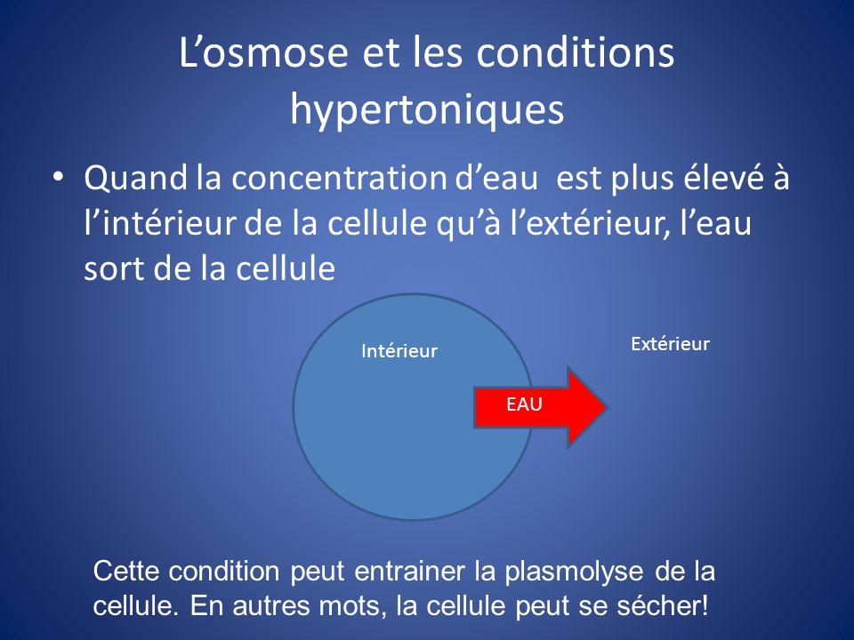 Losmose et les conditions hypertoniques Quand la concentration deau est plus élevé à lintérieur de la cellule quà lextérieur, leau sort de la cellule