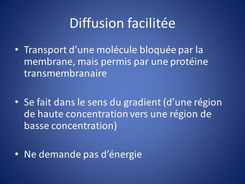 Diffusion facilitée Transport dune molécule bloquée par la membrane, mais permis par une protéine transmembranaire Se fait dans le sens du gradient (d