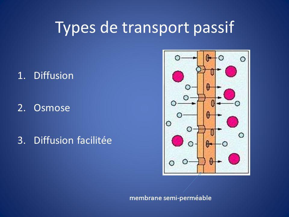 Types de transport passif 1.Diffusion 2.Osmose 3.Diffusion facilitée membrane semi-perméable