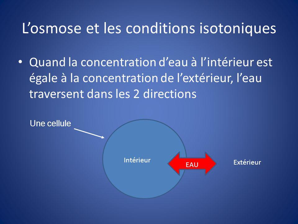 Losmose et les conditions hypotoniques Quand la concentration deau est plus élevé à lextérieur de la cellule quà lintérieur, leau entre dans la cellule EAU IntérieurExtérieur Cette condition peut entrainer la lyse de la cellule.