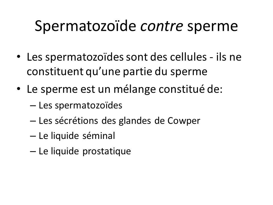 Spermatozoïde contre sperme Les spermatozoïdes sont des cellules - ils ne constituent quune partie du sperme Le sperme est un mélange constitué de: –
