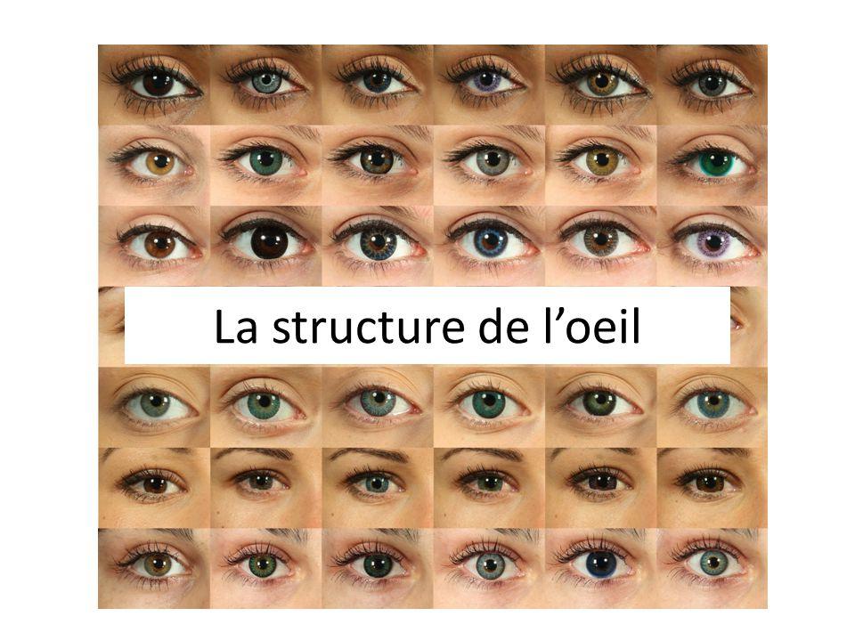 La structure de loeil