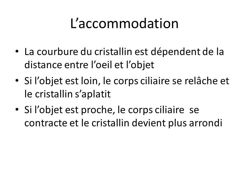 Laccommodation La courbure du cristallin est dépendent de la distance entre loeil et lobjet Si lobjet est loin, le corps ciliaire se relâche et le cri