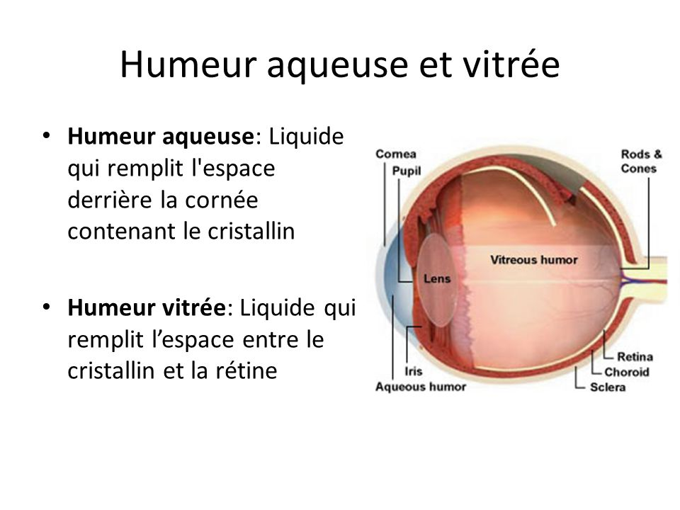 Humeur aqueuse et vitrée Humeur aqueuse: Liquide qui remplit l'espace derrière la cornée contenant le cristallin Humeur vitrée: Liquide qui remplit le