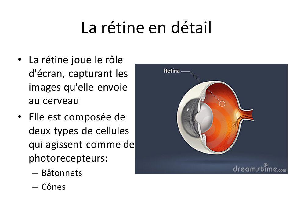 La rétine en détail La rétine joue le rôle d'écran, capturant les images qu'elle envoie au cerveau Elle est composée de deux types de cellules qui agi