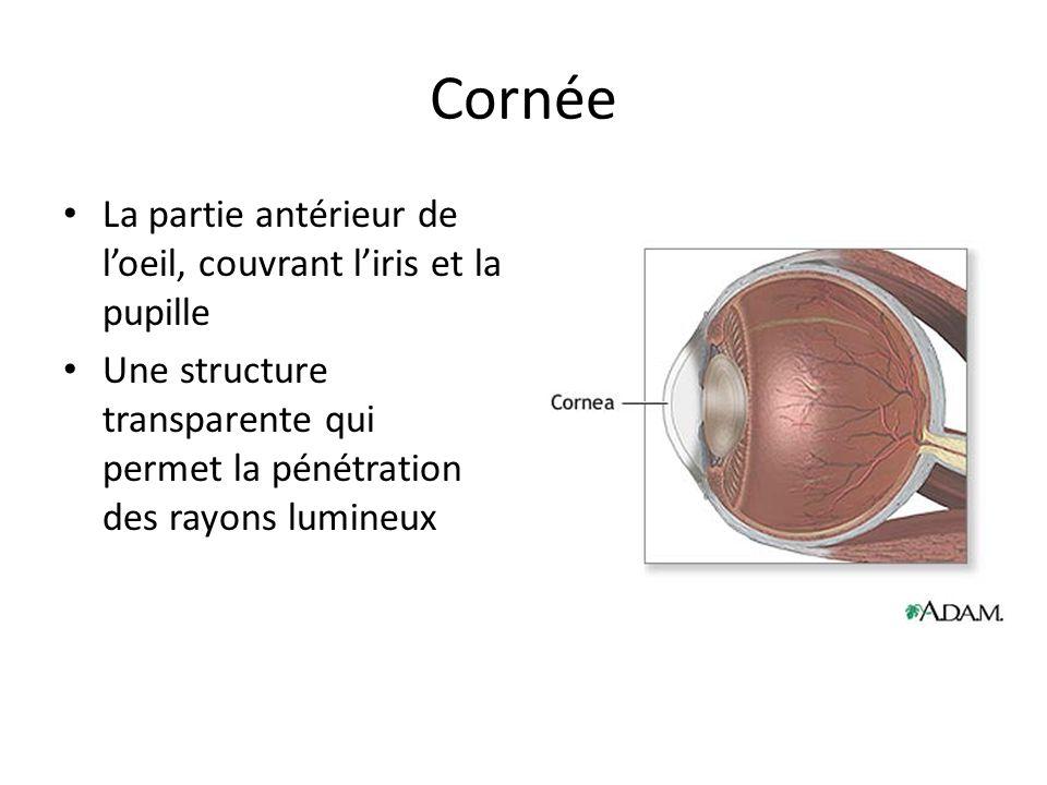Cornée La partie antérieur de loeil, couvrant liris et la pupille Une structure transparente qui permet la pénétration des rayons lumineux