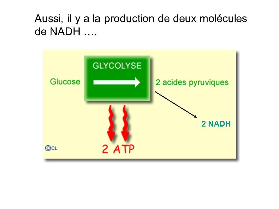 2 NADH Aussi, il y a la production de deux molécules de NADH ….