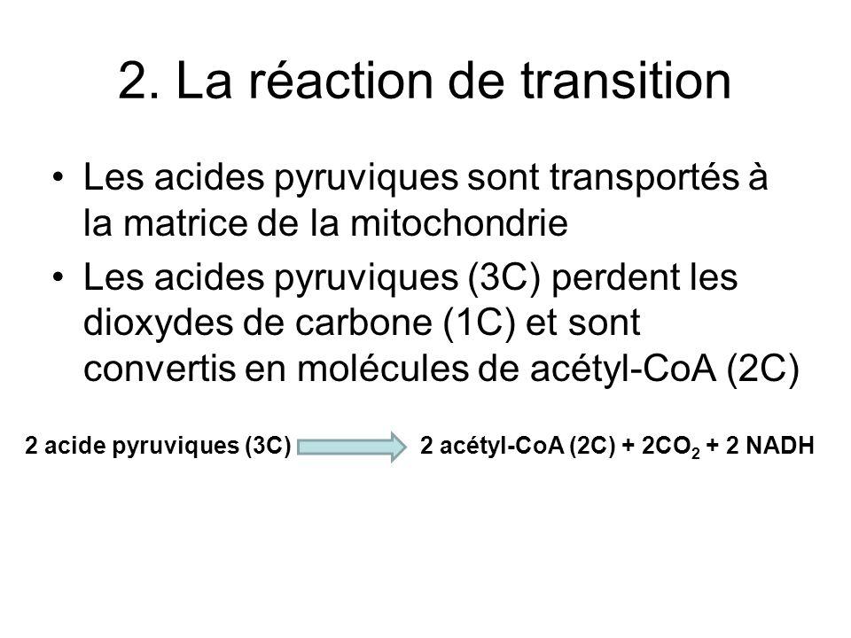 2. La réaction de transition Les acides pyruviques sont transportés à la matrice de la mitochondrie Les acides pyruviques (3C) perdent les dioxydes de