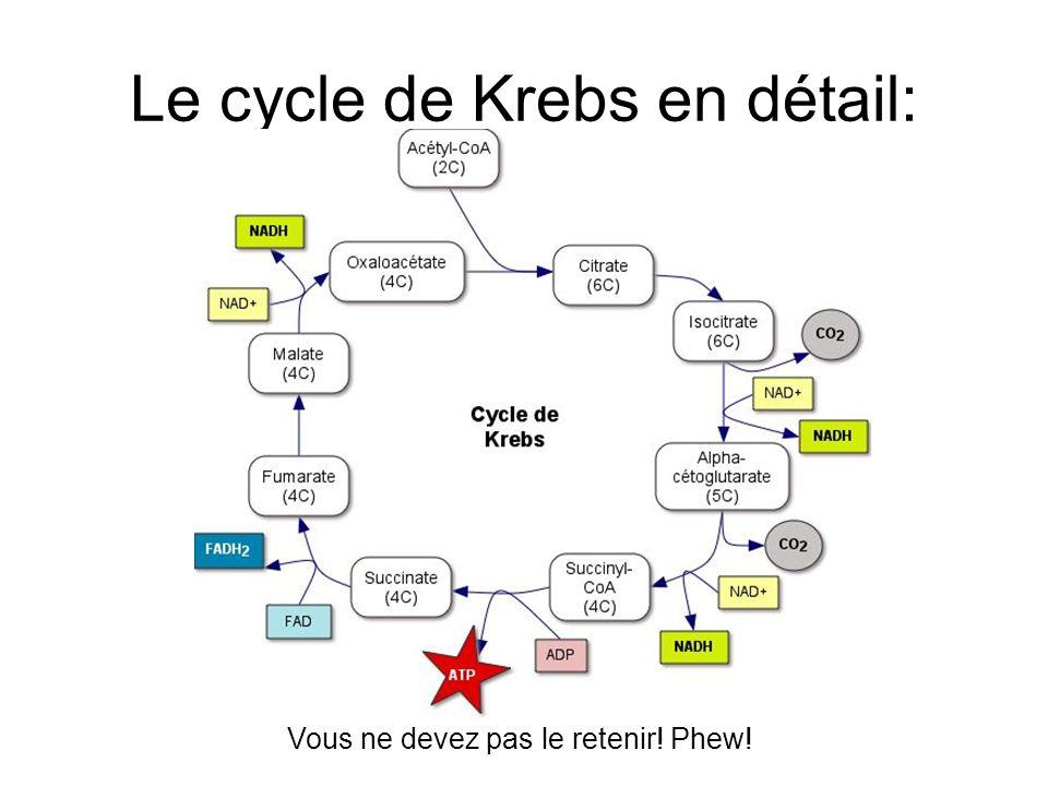 Le cycle de Krebs en détail: Vous ne devez pas le retenir! Phew!