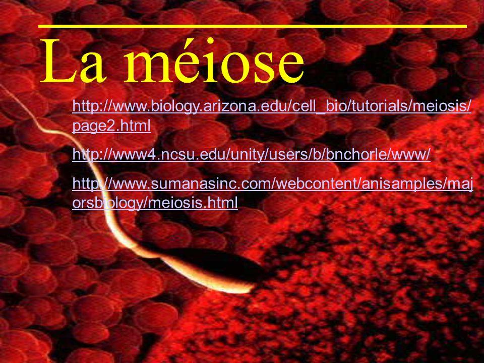 La méiose http://www.biology.arizona.edu/cell_bio/tutorials/meiosis/ page2.html http://www4.ncsu.edu/unity/users/b/bnchorle/www/ http://www.sumanasinc