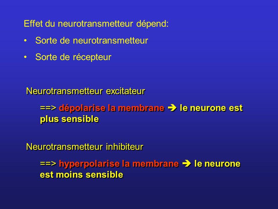 Effet du neurotransmetteur dépend: Sorte de neurotransmetteur Sorte de récepteur Neurotransmetteur excitateur ==> dépolarise la membrane le neurone es
