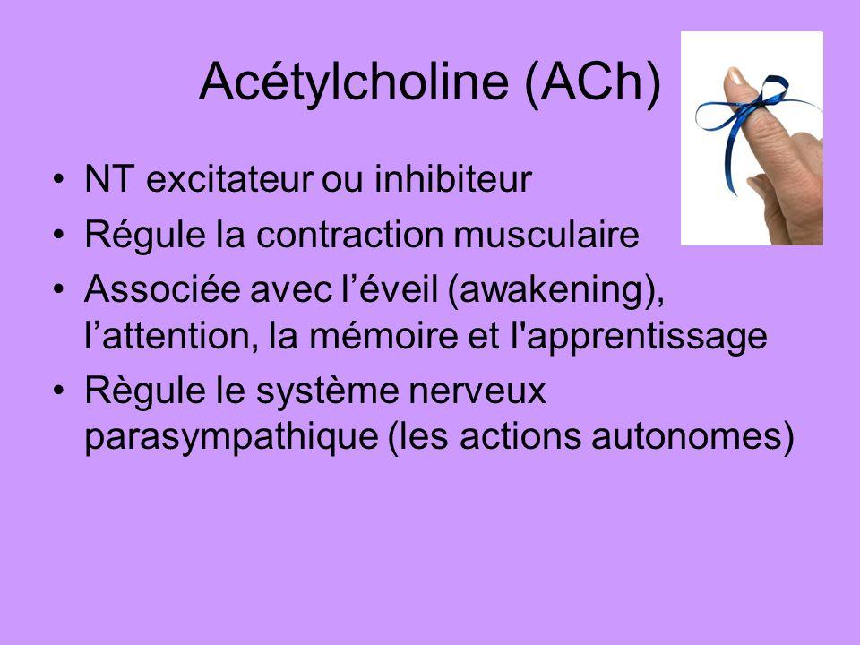 Acétylcholine (ACh) NT excitateur ou inhibiteur Régule la contraction musculaire Associée avec léveil (awakening), lattention, la mémoire et l'apprent