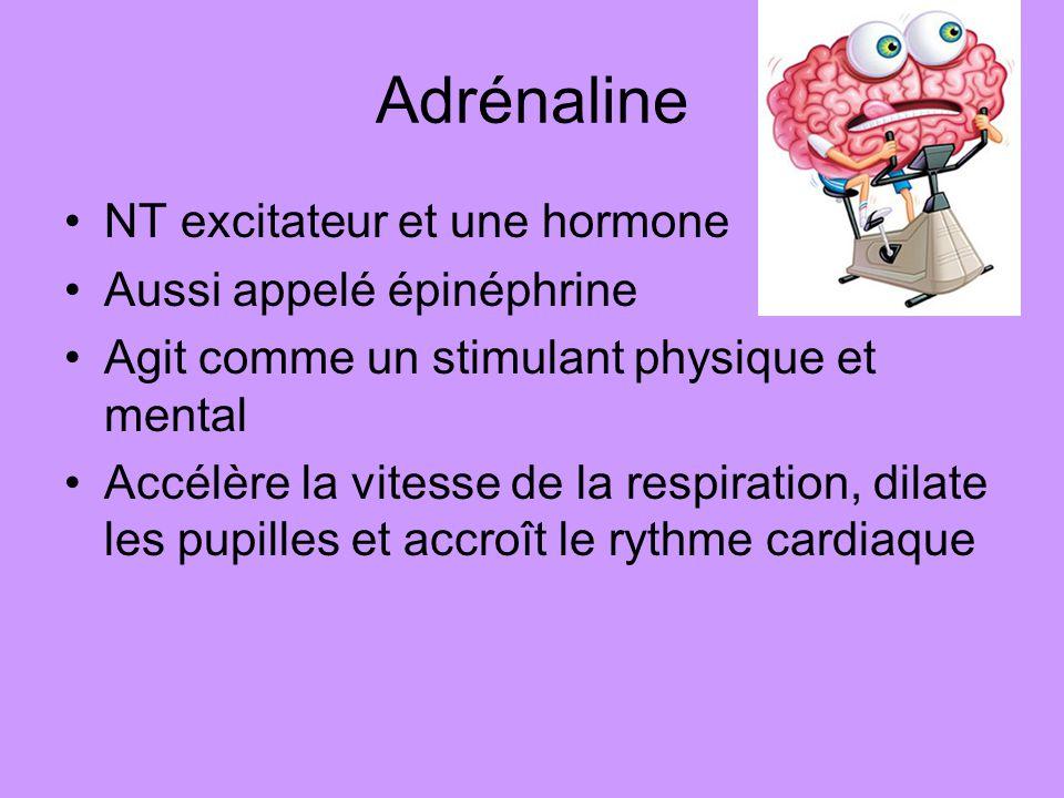 Adrénaline NT excitateur et une hormone Aussi appelé épinéphrine Agit comme un stimulant physique et mental Accélère la vitesse de la respiration, dil