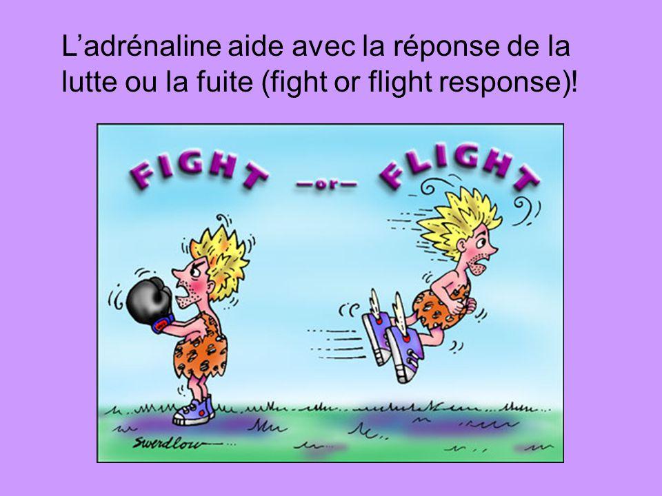 Ladrénaline aide avec la réponse de la lutte ou la fuite (fight or flight response)!