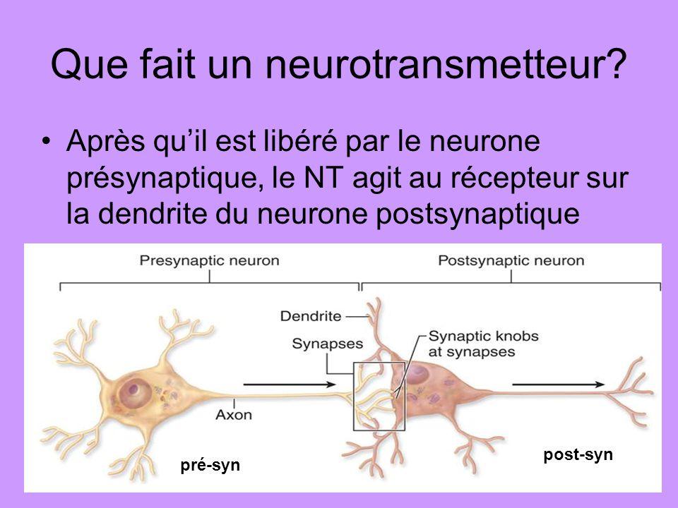Neurotransmetteur excitateur Si un NT excitateur agit aux récepteurs du neurone postsynaptique, il cause louverture des canaux de sodium (Na+) Les ions de sodium entrent et rendent le neurone plus positif Ceci provoque un onde de dépolarisation au neurone postsynaptique et il peut décharger