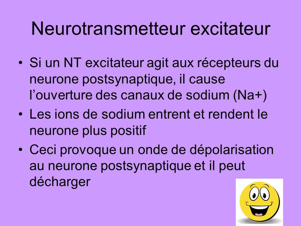 Neurotransmetteur inhibiteur Si un NT inhibiteur agit aux récepteurs du neurone postsynaptique, il cause louverture des canaux de chlore (Cl-) Les ions de chlore entrent et rendent le neurone plus négatif Ceci provoque un hyperpolarisation dans le neurone postsynaptique et il ne peut pas décharger