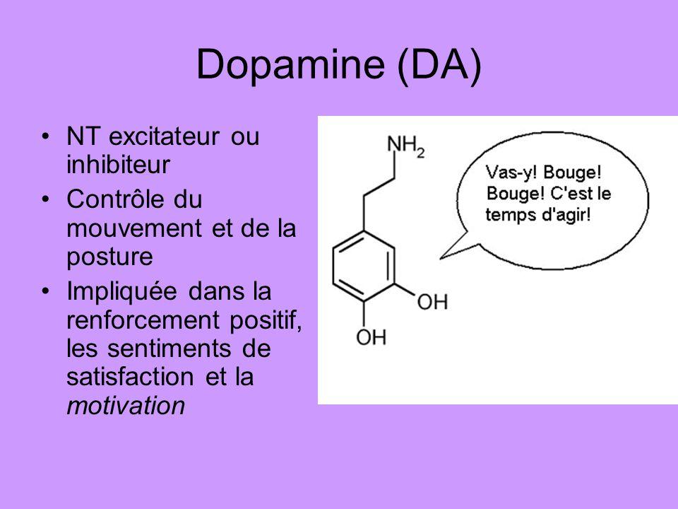 Dopamine (DA) NT excitateur ou inhibiteur Contrôle du mouvement et de la posture Impliquée dans la renforcement positif, les sentiments de satisfactio