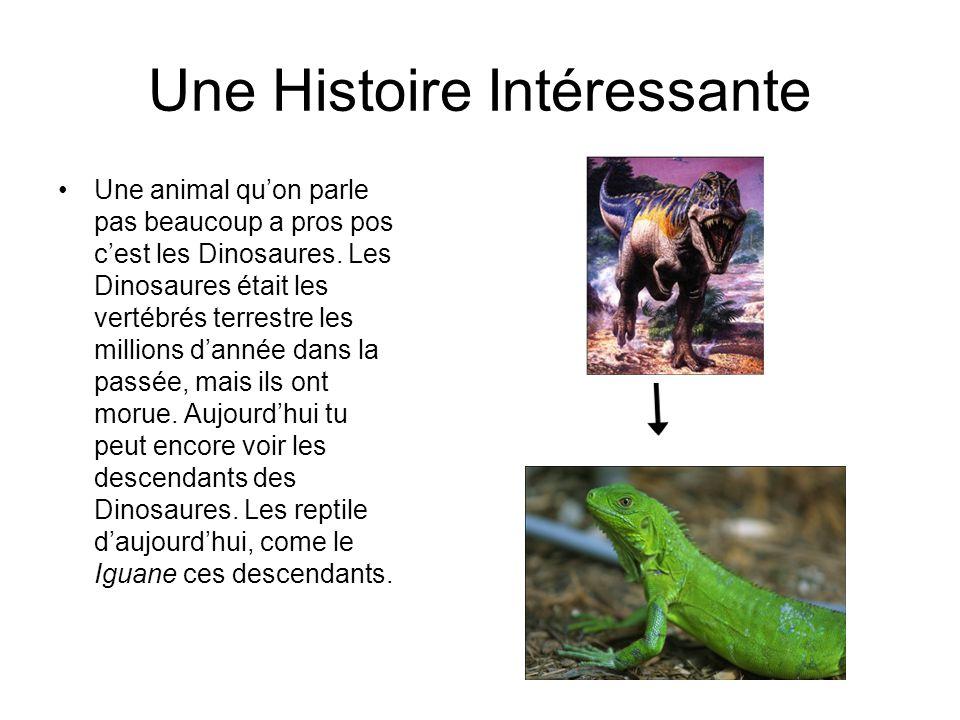 Une Histoire Intéressante Une animal quon parle pas beaucoup a pros pos cest les Dinosaures.